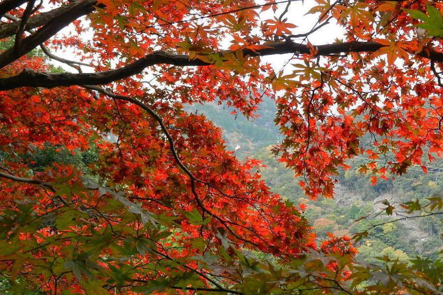 森のリゾートに暮らす(三重県湯の山温泉編 Part2)