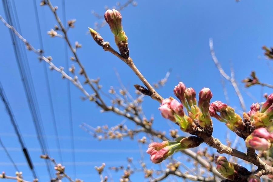 桜が見える家