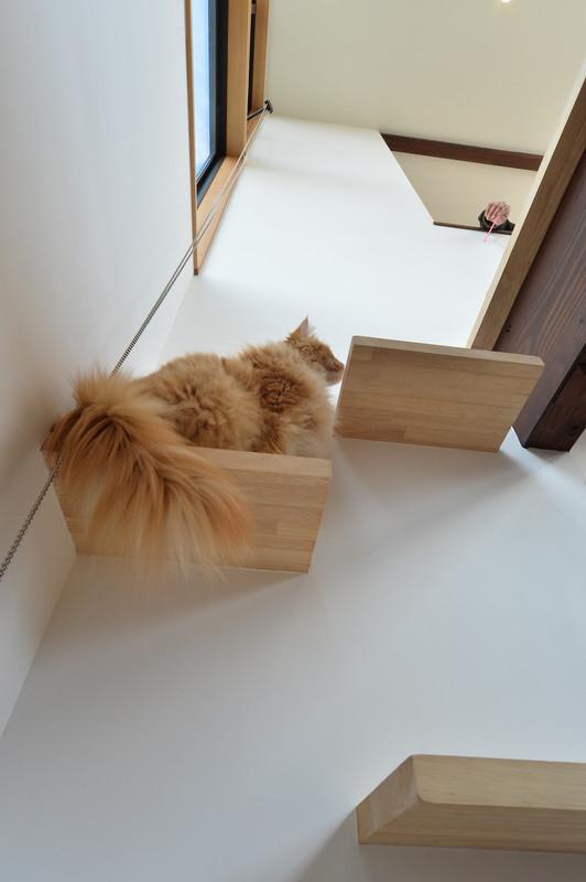 猫が走り回る家 愛知県一宮市